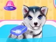 Cachorro Husky al Salón de Belleza