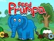 Feed Prumpa Elefante